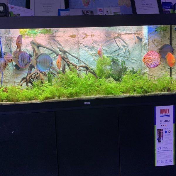 Live Aquarium & Pond Plants